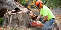 Professional Tree Services In Sydney