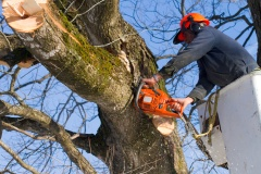 Professional Tree Service Provider In Australia